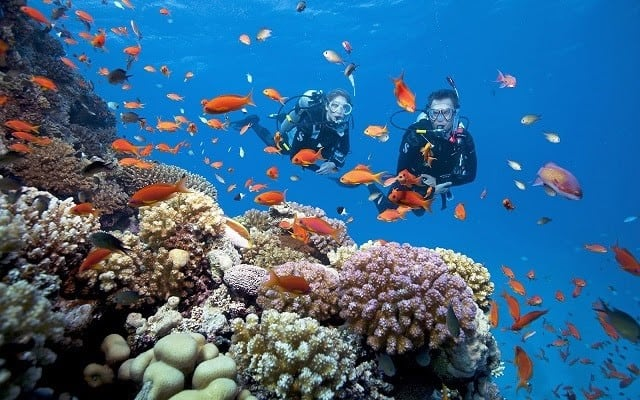 Lặn ngắm san hô là hoạt động được yêu thích tại Vega City Nha Trang