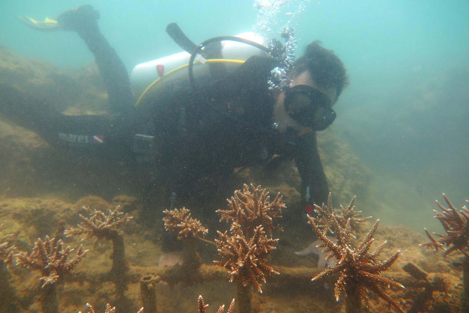 Dự án Công viên san hô Vạn San Đảo
