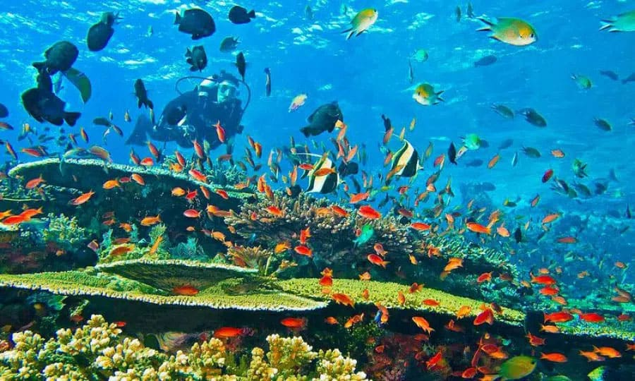 công viên san hô vega city nha trang kdi holdings